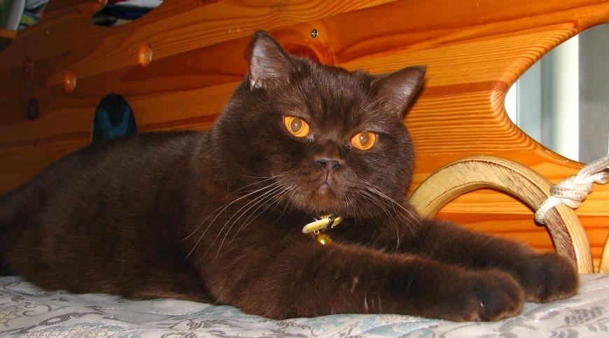 Кот Ричард на Локере