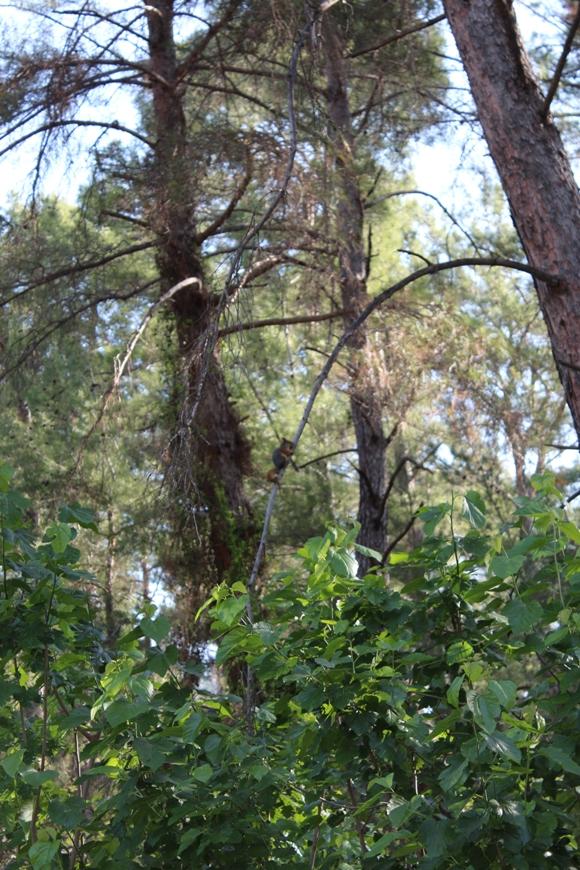 Лес из Форест Гейта
