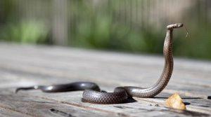 Змея в доме