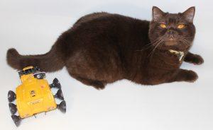 Примерка манипулятора к хвосту кота Ричарда