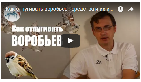 Видеорассказ об отпугивании воробьев