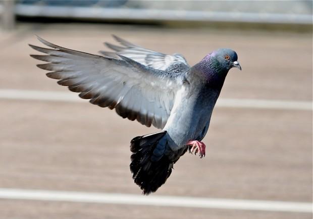 Защита от голубей