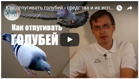 Видеорассказ об отпугивании голубей