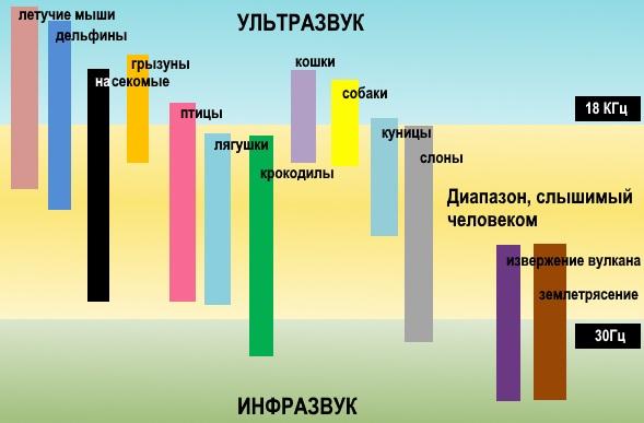 Диаграмма слышимости у разных животных