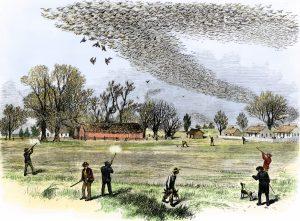 Охота на странствующих голубей, Северная Америка, XIX век