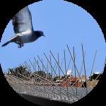 Антиприсадные шипы против голубей