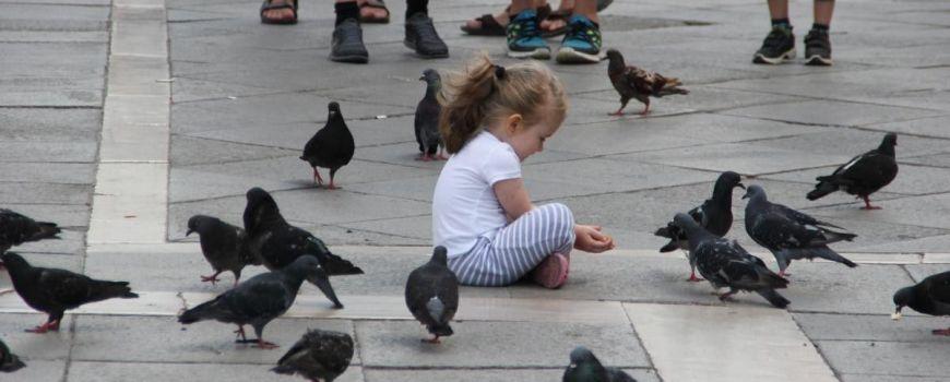 Девочка на асфальте кормит голубей