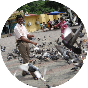 Кормление голубей в Калькутте, Индия