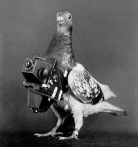 Шпионская аэрофотосъемка голубями