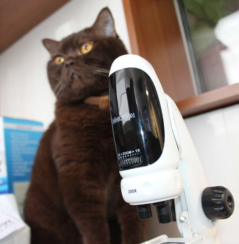 Кот ричард и микроскоп