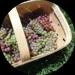 Виноград в корзинке