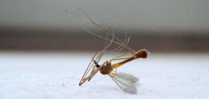 Смерть комара