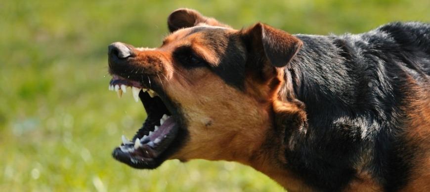 Нападение злой собаки