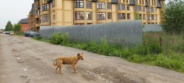 Бродячие собаки на дачном участке