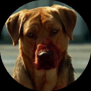 Злая презлая собака