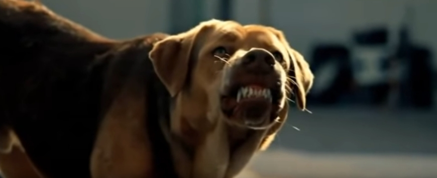 Пес настроен явно воинственно: показывает клыки, шерсть вздыблена, взгляд направлен прямо на жертву. До нападения - секунды...