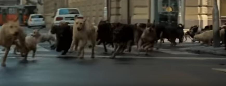 стая собак в городе