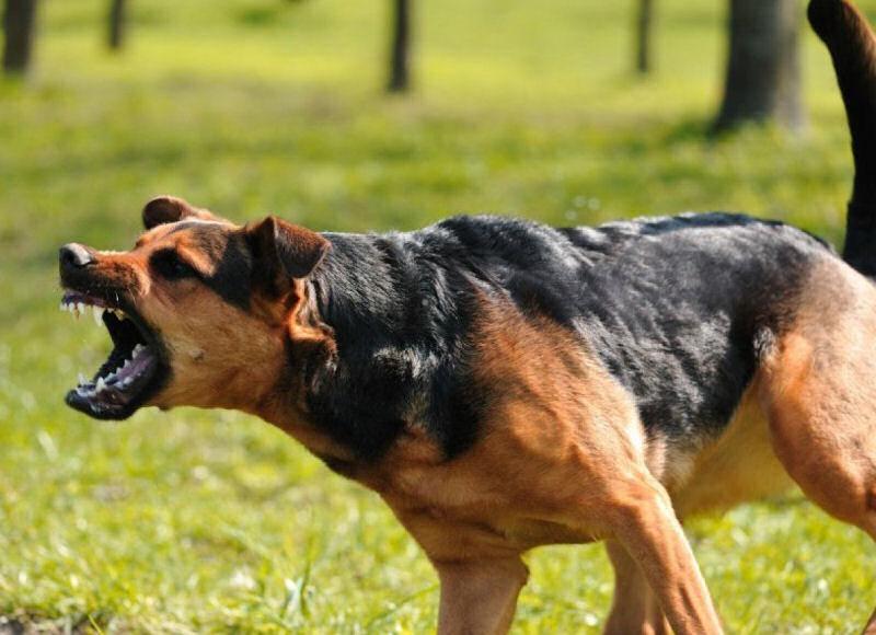 Собака скалит зубы