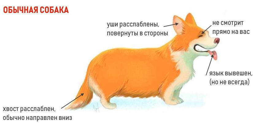 Собака спокойна