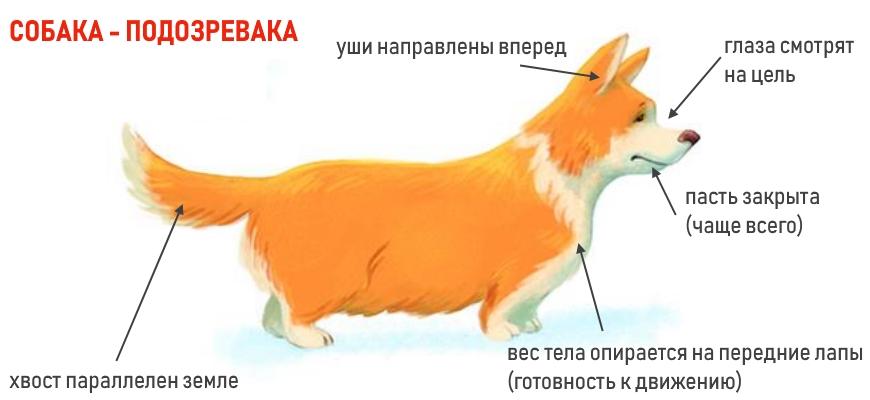 Собака настороже