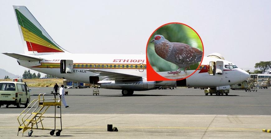 15.09.1988, Boeing 737-200, Эфиопия, Бахр-Дар