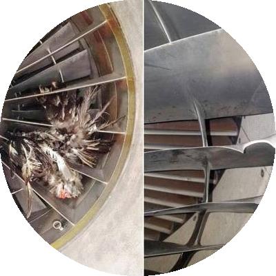 Поврежденный птицами двигатель